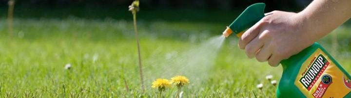 sprayweeds-roundup