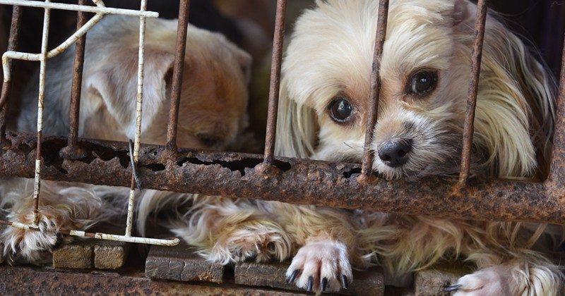 puppymill2